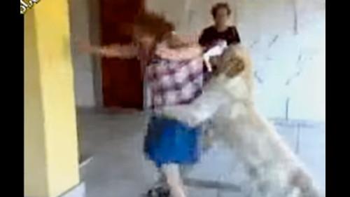 cane-ubaldo
