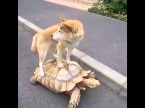 Il cane chiede un passaggio alla tartaruga
