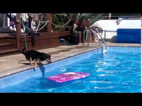 Il cane riesce a fare surf in piscina