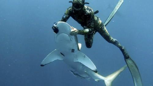 Manda squalo in trance per rimuovere un amo