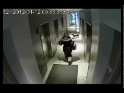 Video assurdo di un cane incastrato in ascensore